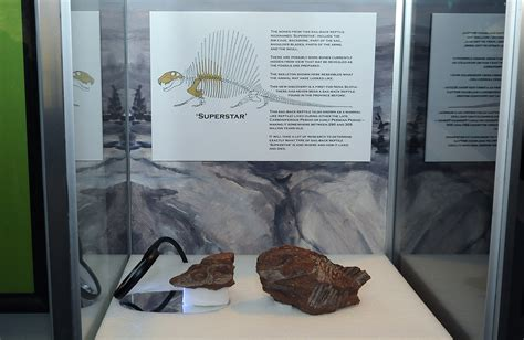 Family Makes Province's Most Significant Fossil Find